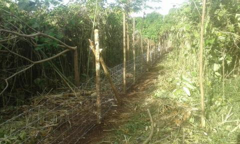 Agroforestry garden with pig-proof fence
